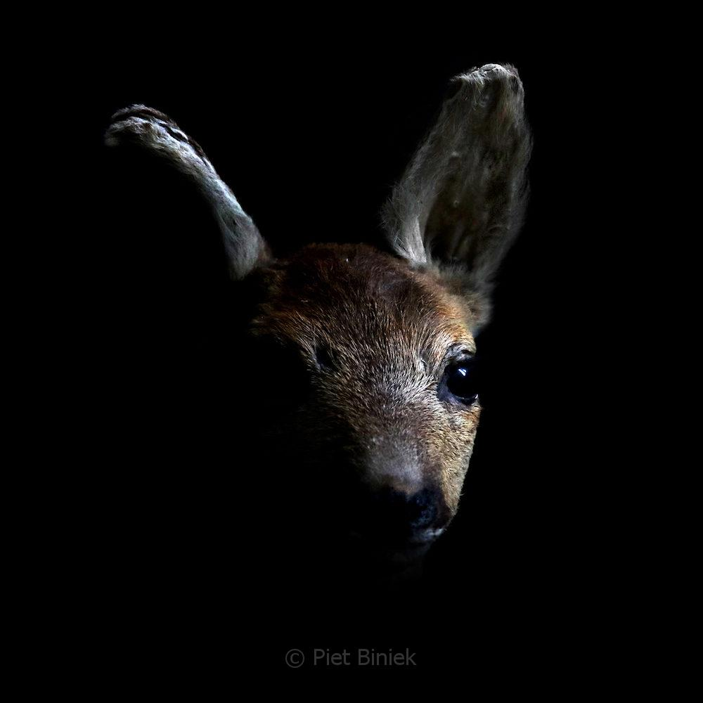 portrait of a dead fawn in the dawn